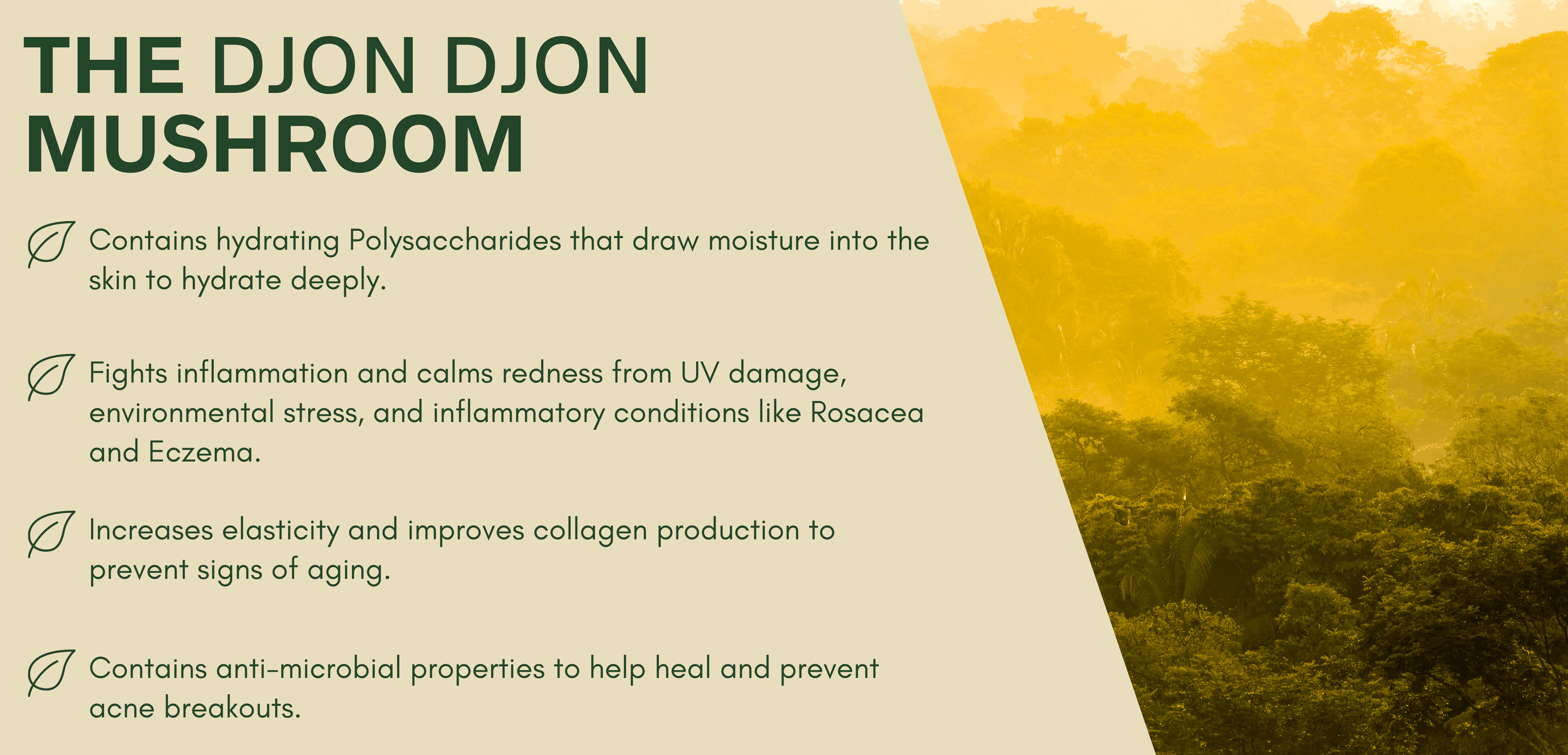 djon djon mushroom benefits